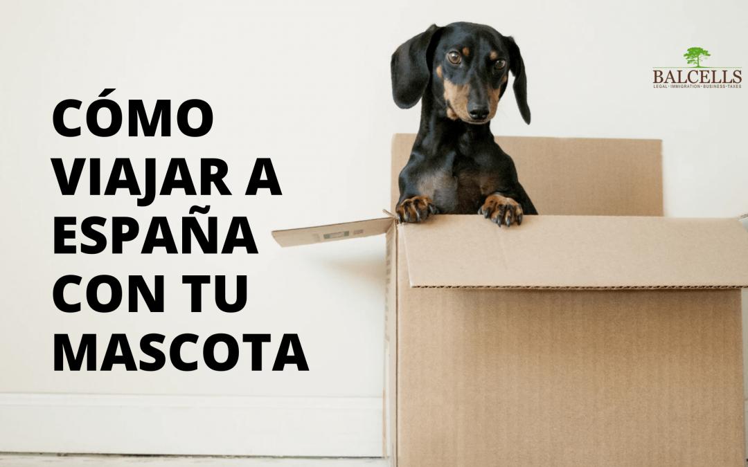 Viajar a España con Mascotas o Animales: Leyes y Requisitos de Entrada