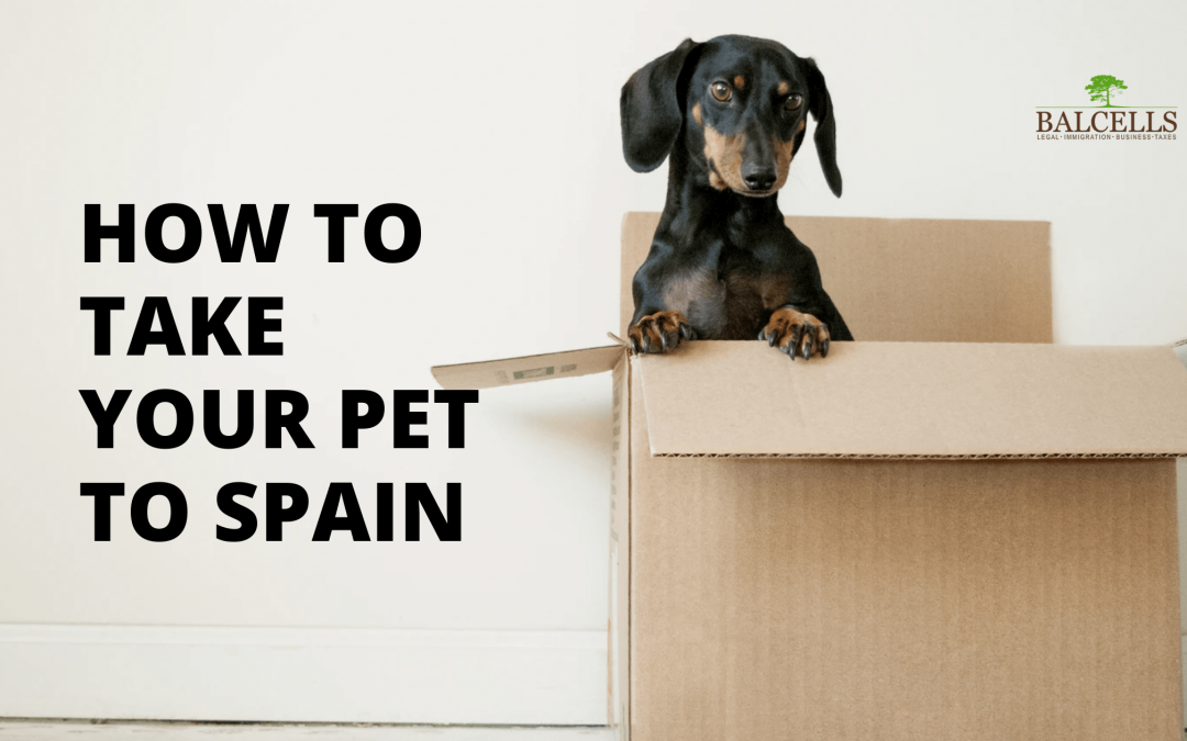 How to Take your Pet to Spain: Immigration Laws & Entry Requirements